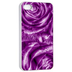 Gorgeous Roses,purple  Apple iPhone 4/4s Seamless Case (White)
