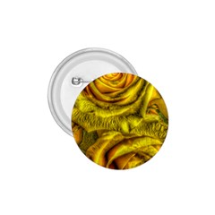 Gorgeous Roses, Yellow  1 75  Buttons