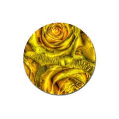 Gorgeous Roses, Yellow  Magnet 3  (round)