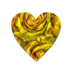 Gorgeous Roses, Yellow  Heart Magnet