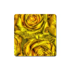 Gorgeous Roses, Yellow  Square Magnet