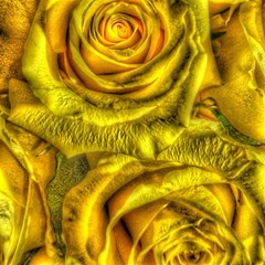 Gorgeous Roses, Yellow  Magic Photo Cubes