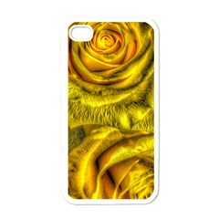 Gorgeous Roses, Yellow  Apple iPhone 4 Case (White)