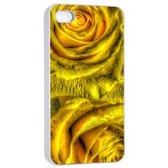 Gorgeous Roses, Yellow  Apple iPhone 4/4s Seamless Case (White)