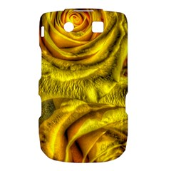 Gorgeous Roses, Yellow  Torch 9800 9810
