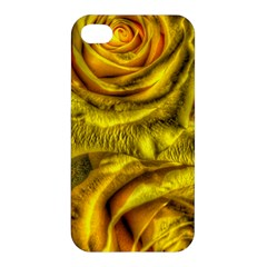 Gorgeous Roses, Yellow  Apple Iphone 4/4s Premium Hardshell Case