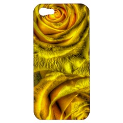 Gorgeous Roses, Yellow  Apple iPhone 5 Hardshell Case