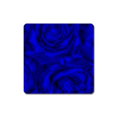 Gorgeous Roses,deep Blue Square Magnet