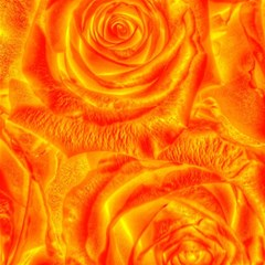 Gorgeous Roses, Orange Magic Photo Cubes