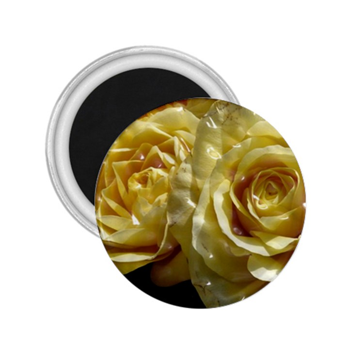 Yellow Roses 2.25  Magnets