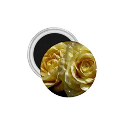 Yellow Roses 1 75  Magnets