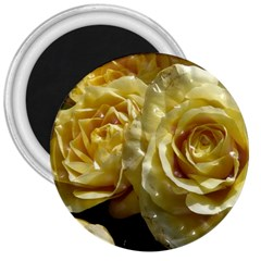 Yellow Roses 3  Magnets