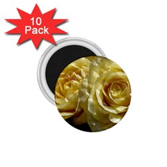 Yellow Roses 1 75  Magnets (10 Pack)