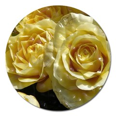 Yellow Roses Magnet 5  (round)