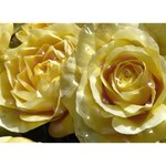 Yellow Roses I Love You 3D Greeting Card (7x5)  Back
