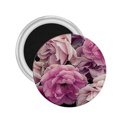 Great Garden Roses Pink 2 25  Magnets