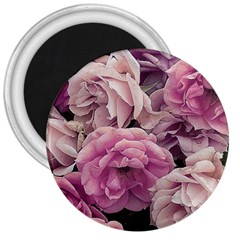 Great Garden Roses Pink 3  Magnets