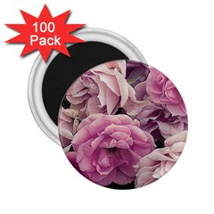 Great Garden Roses Pink 2 25  Magnets (100 Pack)