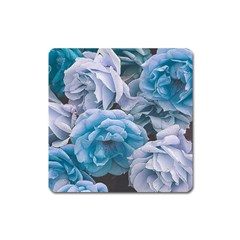 Great Garden Roses Blue Square Magnet