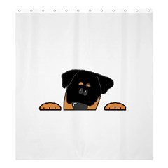 Peeping Rottweiler Shower Curtain 66  x 72  (Large)
