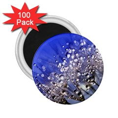 Dandelion 2015 0704 2 25  Magnets (100 Pack)