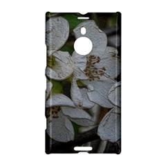 Amazing Garden Flowers 32 Nokia Lumia 1520