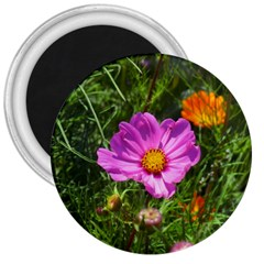Amazing Garden Flowers 24 3  Magnets