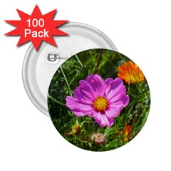 Amazing Garden Flowers 24 2 25  Buttons (100 Pack)