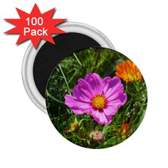 Amazing Garden Flowers 24 2 25  Magnets (100 Pack)