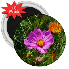 Amazing Garden Flowers 24 3  Magnets (10 Pack)
