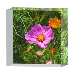 Amazing Garden Flowers 24 5  x 5  Acrylic Photo Blocks