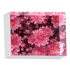 Awesome Flowers Red 5 x 7  Acrylic Photo Blocks