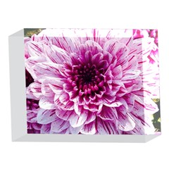 Wonderful Flowers 5 x 7  Acrylic Photo Blocks