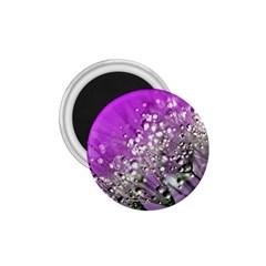 Dandelion 2015 0707 1 75  Magnets
