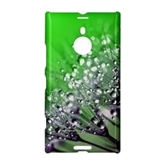 Dandelion 2015 0716 Nokia Lumia 1520