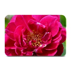 Red Rose Plate Mats