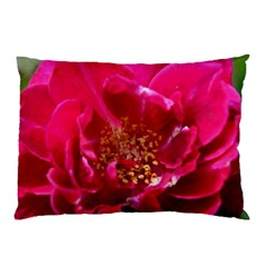 Red Rose Pillow Cases
