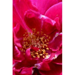 Red Rose 5 5  X 8 5  Notebooks