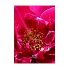 Red Rose Shower Curtain 48  x 72  (Small)