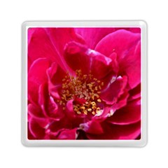 Red Rose Memory Card Reader (Square)