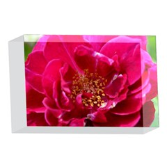 Red Rose 4 x 6  Acrylic Photo Blocks