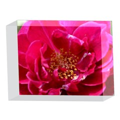 Red Rose 5 x 7  Acrylic Photo Blocks