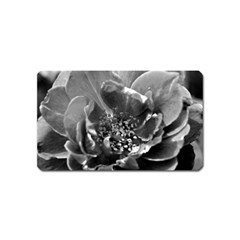 Black And White Rose Magnet (name Card)
