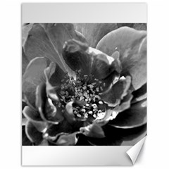 Black And White Rose Canvas 18  X 24