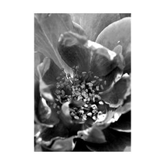 Black and White Rose Shower Curtain 48  x 72  (Small)