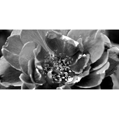 Black and White Rose YOU ARE INVITED 3D Greeting Card (8x4)
