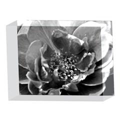 Black and White Rose 5 x 7  Acrylic Photo Blocks