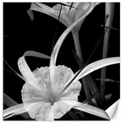Exotic Black And White Flowers Canvas 12  X 12