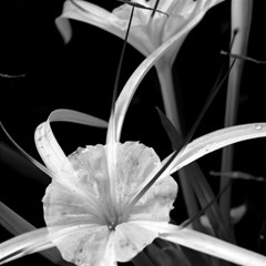 Exotic Black and White Flowers Magic Photo Cubes
