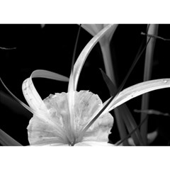 Exotic Black And White Flowers Birthday Cake 3d Greeting Card (7x5)